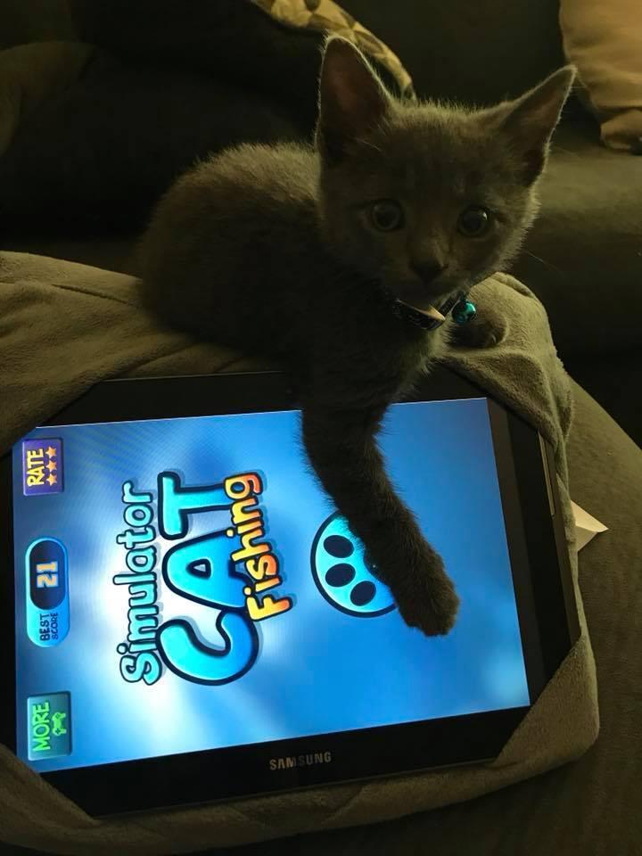 Our new kitten Ollie!
