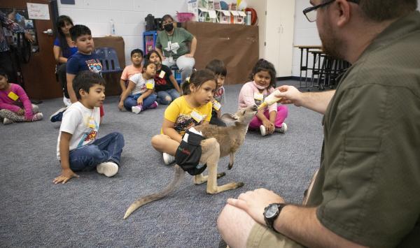 man bottle feeding baby kangaroo in a classroom
