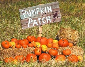 pumpkin-patch-647x510.jpg