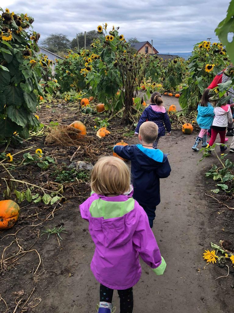 Chidren walking through a pumpkin patch
