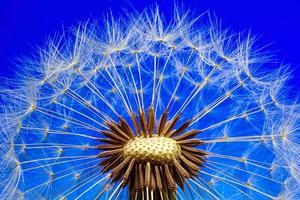 nature-3092555_640.jpg