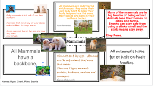 Mammals animal group facts