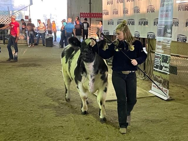 Laney Jo Volkers shows her cow in the arena at the Western Idaho Fair.