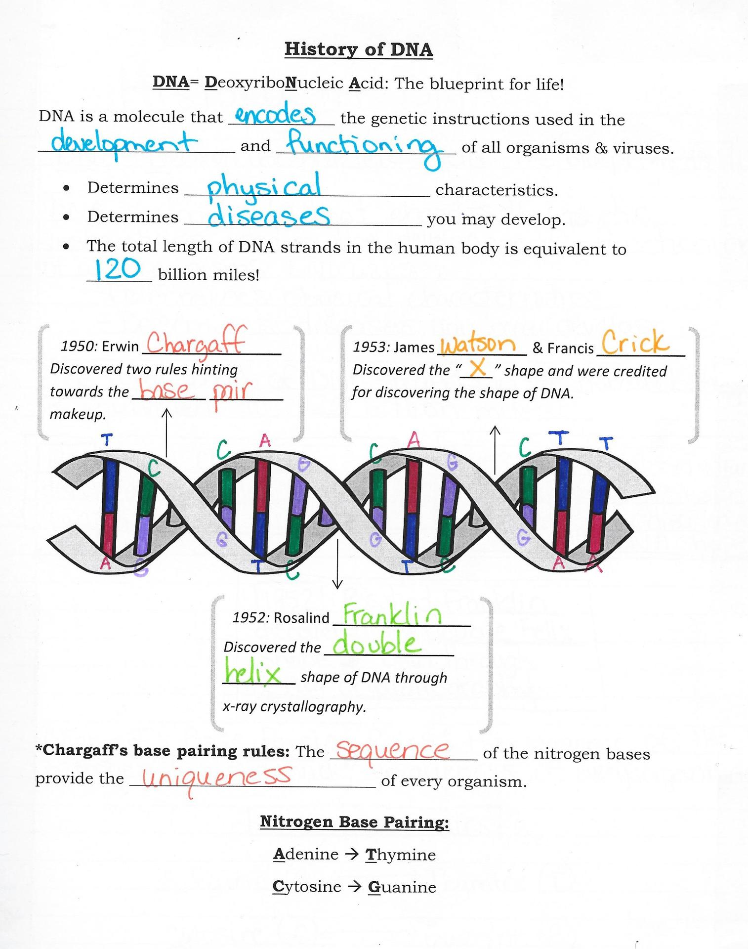 123 Dna Replication Worksheet Answers - Worksheet List