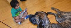 Comfort dogs were a part of North Elementary's Family Reading Night on Oct. 4.