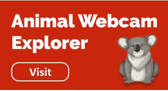 Animal Webcam Explorer