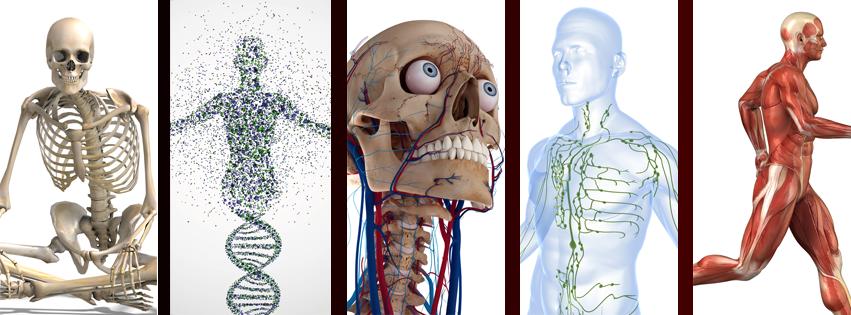 Anatomy header image