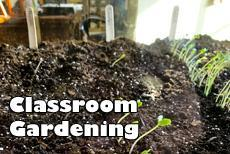 Classroom Gardening Oct 5-9 seedlings