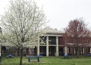 Blooming trees behind Wood-Russ