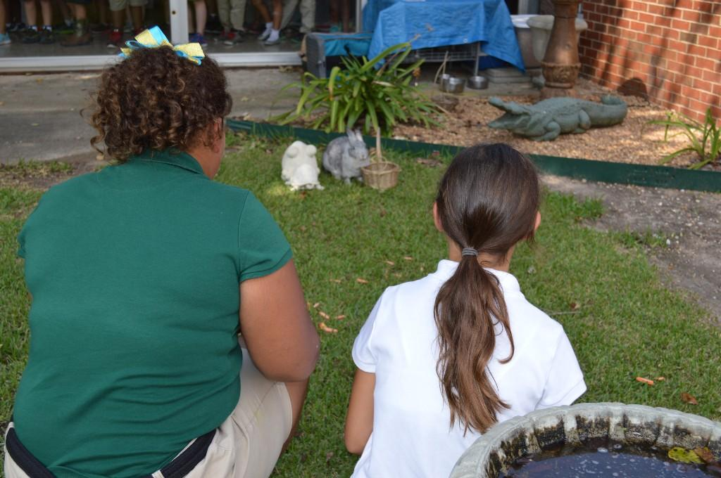 Two young girls are looking at a rabbit in their school's courtyard.