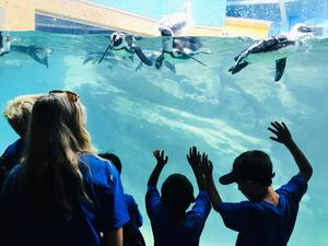 Westfield campers with the English Language Learners (ELL) Summer Experience enjoy the penguins at Turtle Back Zoo in West Orange, a field trip that wrapped up a weeklong study of animals.