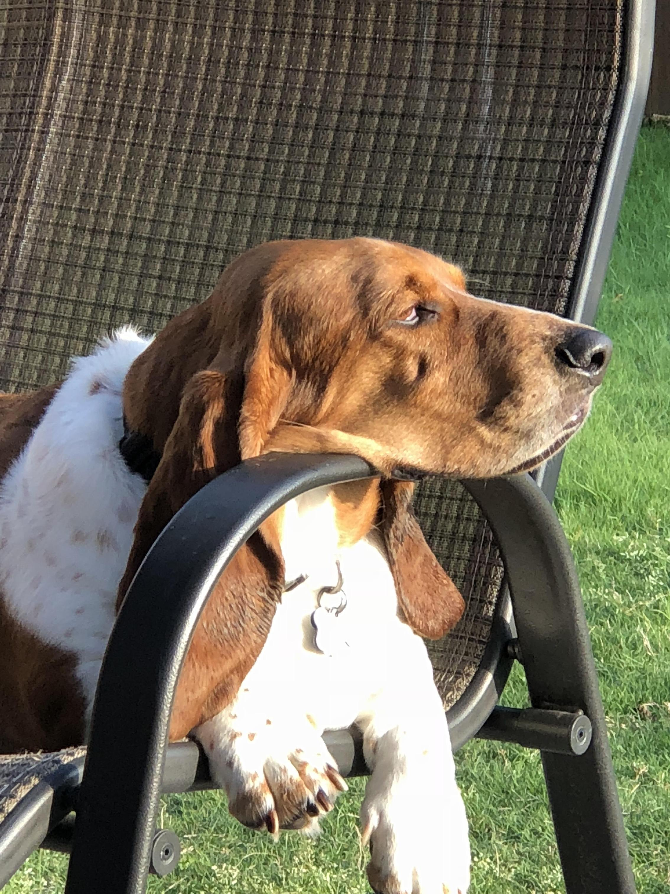 Roscoe in deep thought! 2018