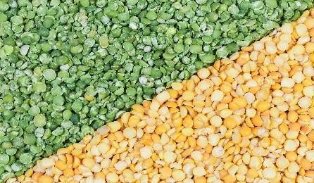 Picture of Split Peas