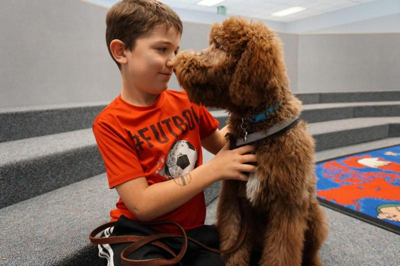 Coco, a Chesapeake-poodle mis therapy dog, visits with a young boy.