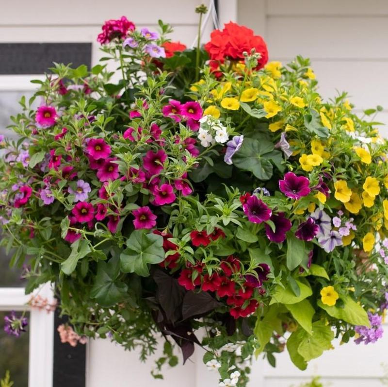 Flower Sale! Featured Photo