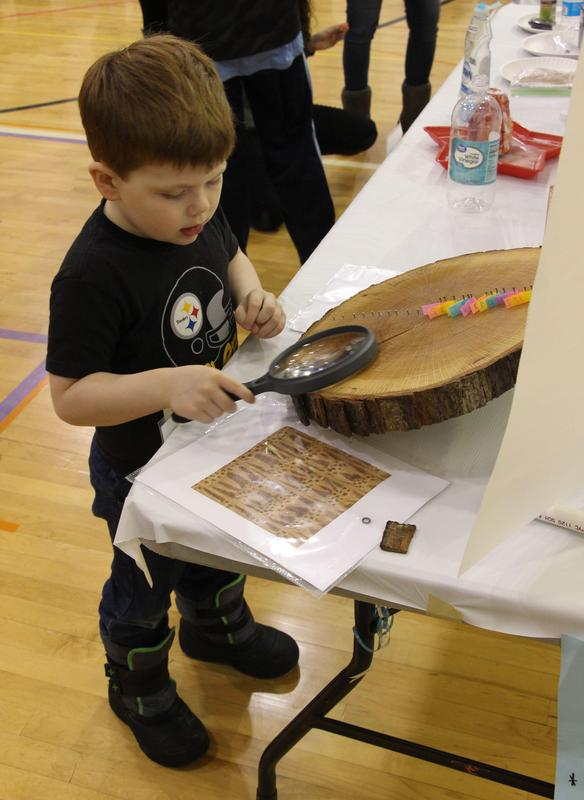 Exploring the rings on a tree at the 2019 Gananda Science Fair