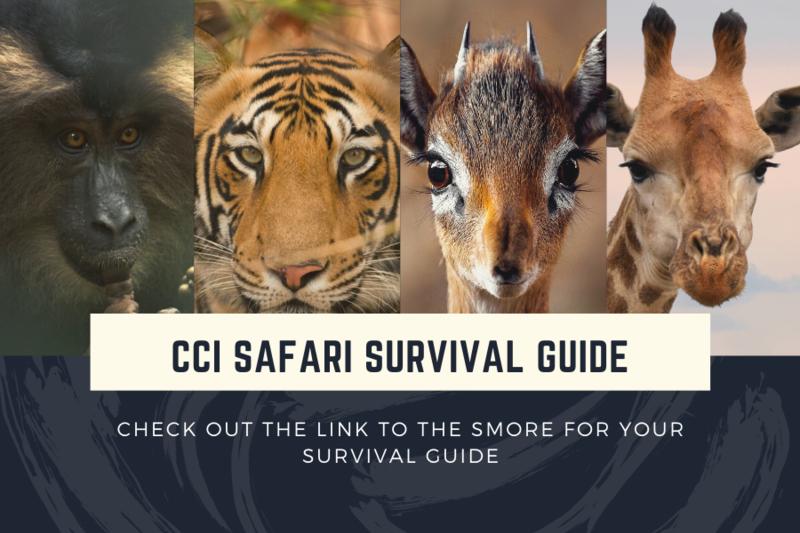 CCI Safari Survival Guide