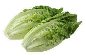 lettuce02-lg.jpg