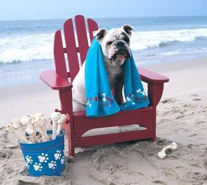 bulldog summer picture