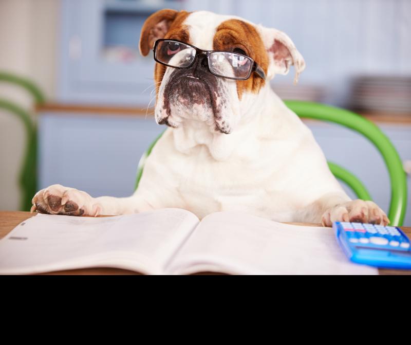The Bulldog Bulletin Featured Photo