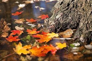 autumn-2900166_640.jpg