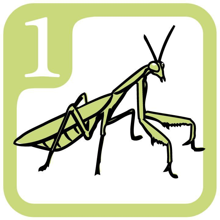 1 Mantis Icon