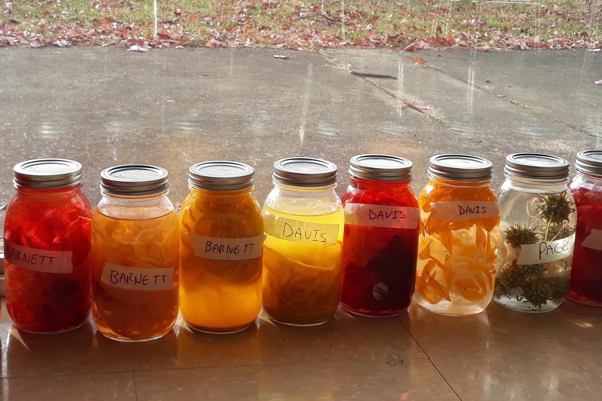 Photograph of solar dyeing using natural items.