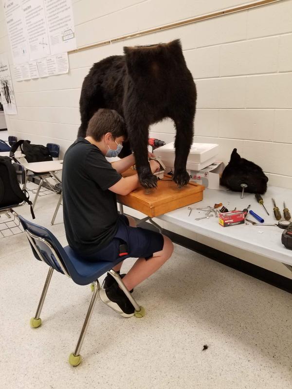 Student works on mechanical bear.