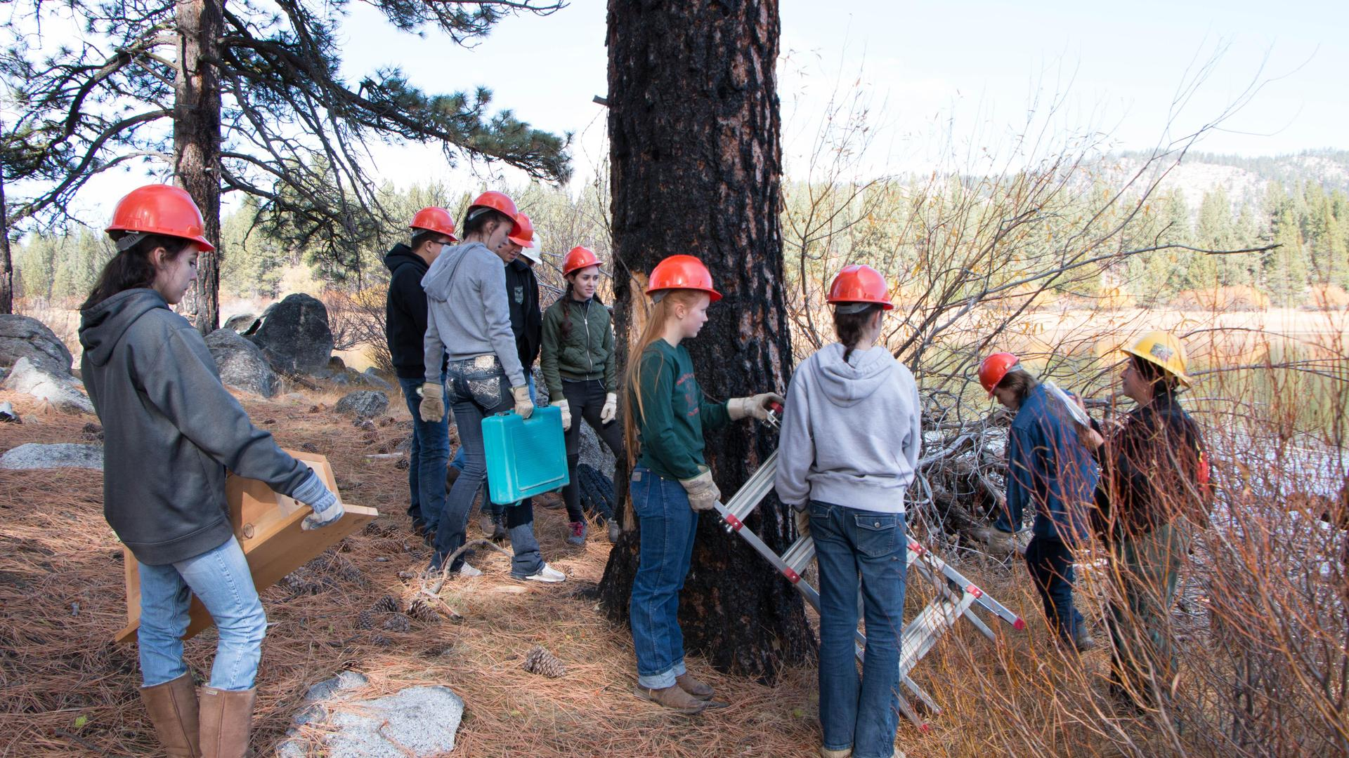 Fire Restoration Project with Plumas National Forest