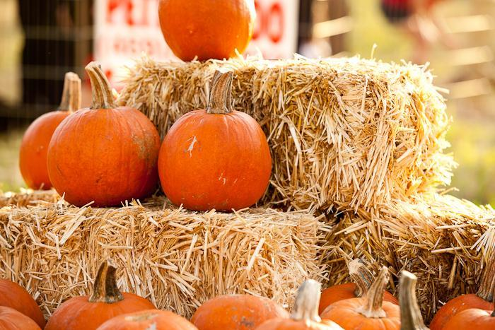 Image of hay and pumpkins for Fall Festival Announcement