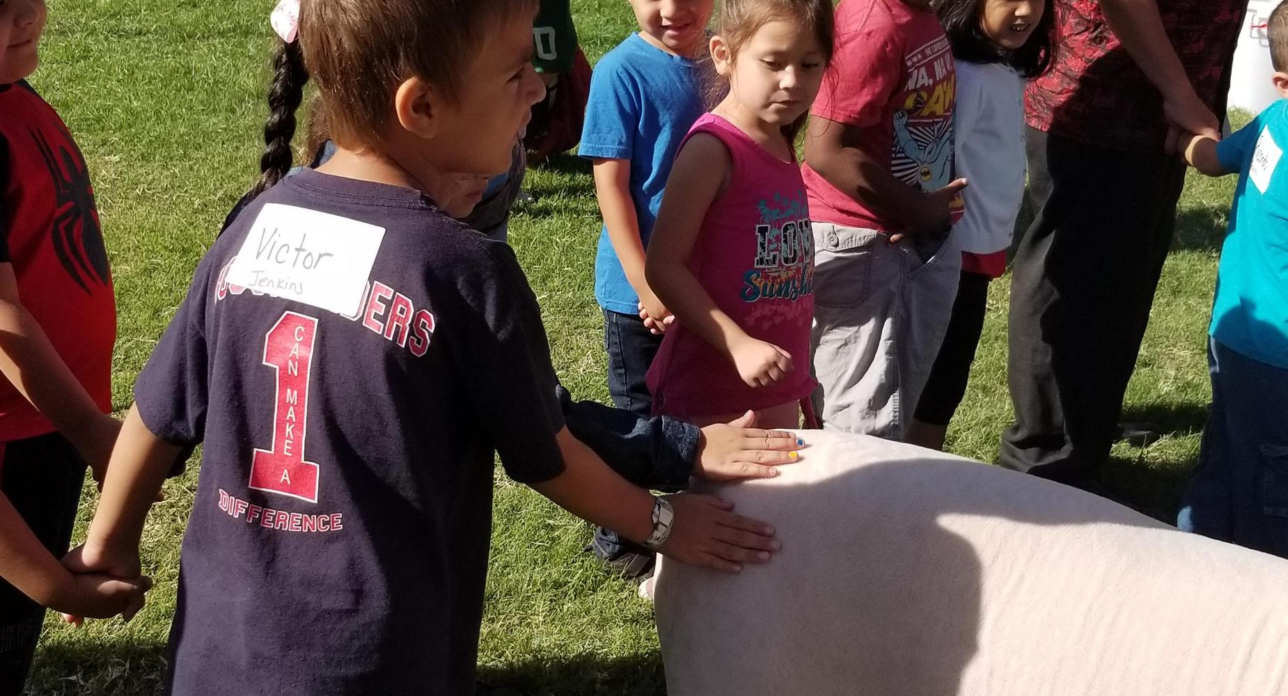 Kindergarten student petting an animal at the Tulare County Fair.