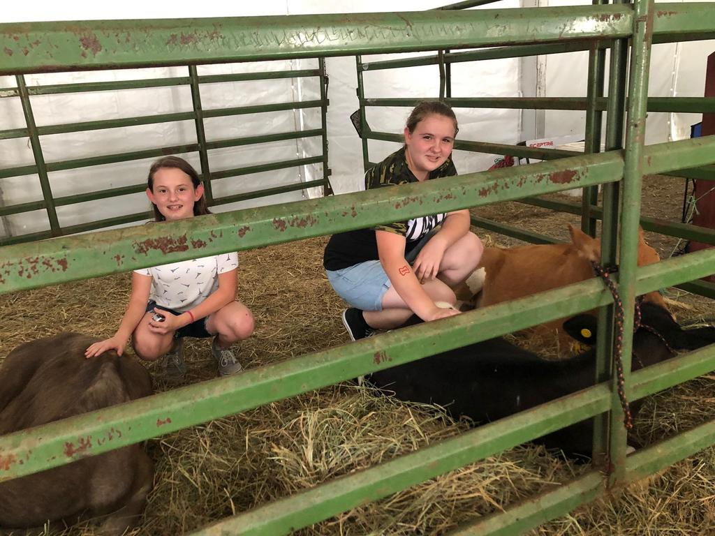 Students petting cows
