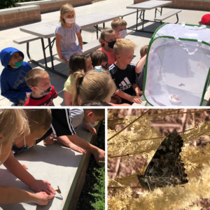 Butterfly life cycle program- image of students with butterflies