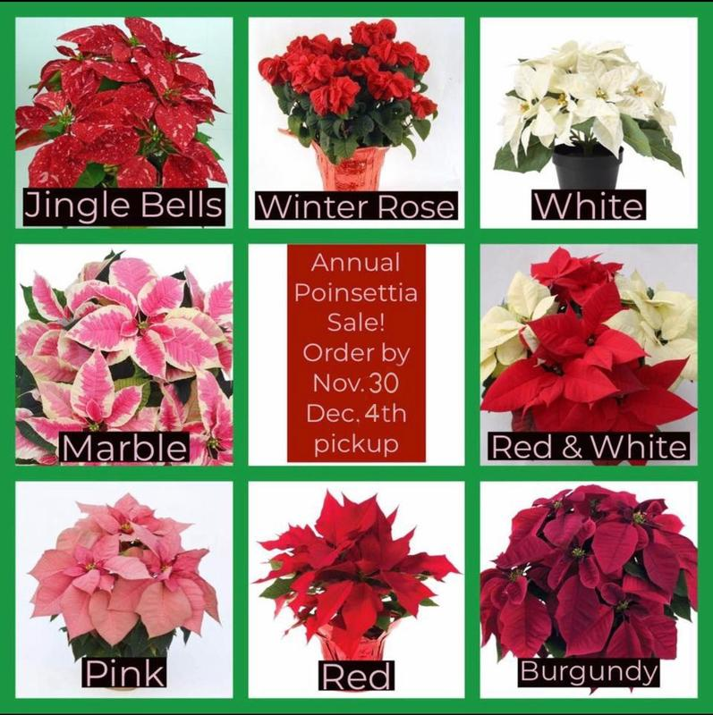 2020 WFS Annual Poinsettia Sale - Order by November 30th! Featured Photo