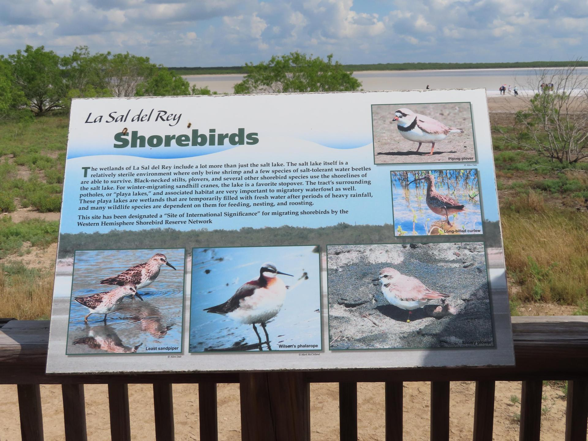 Information sign on Sal Del Ray shorebirds