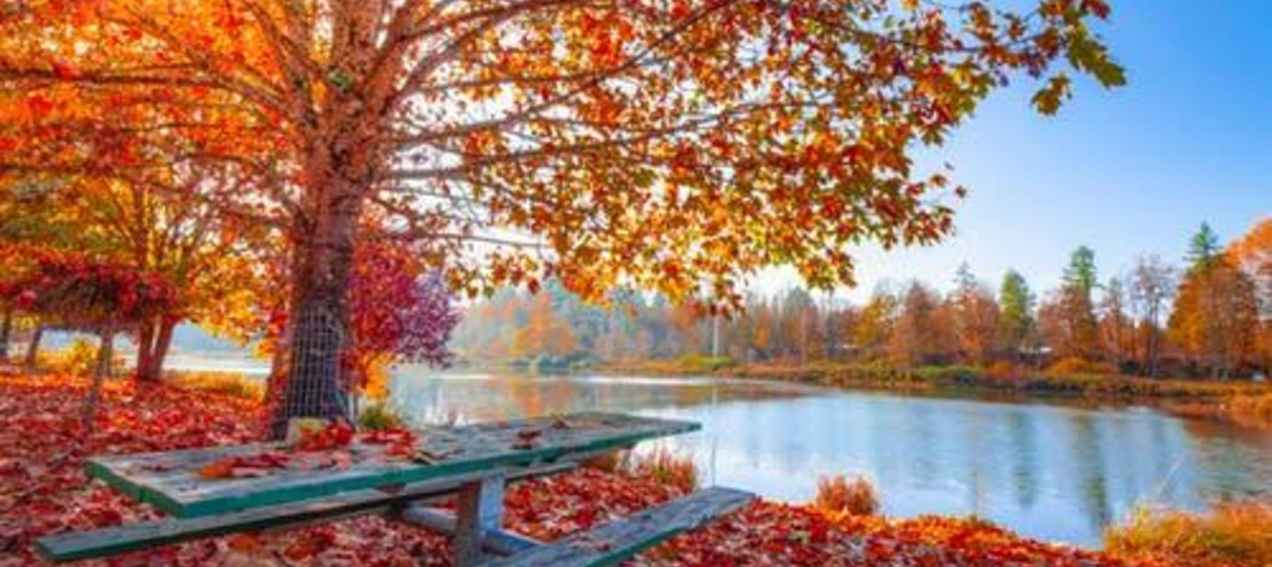 fall leaves, trees, pond, picnic table