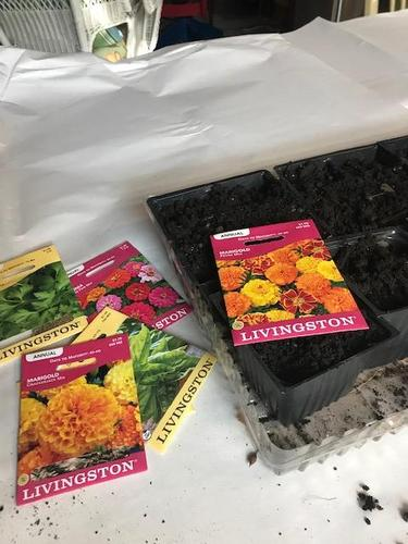 seed packets and planting mix