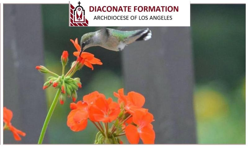 Diaconate Virtual Information Day Featured Photo