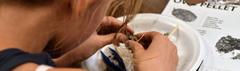 Student examining owl pellet