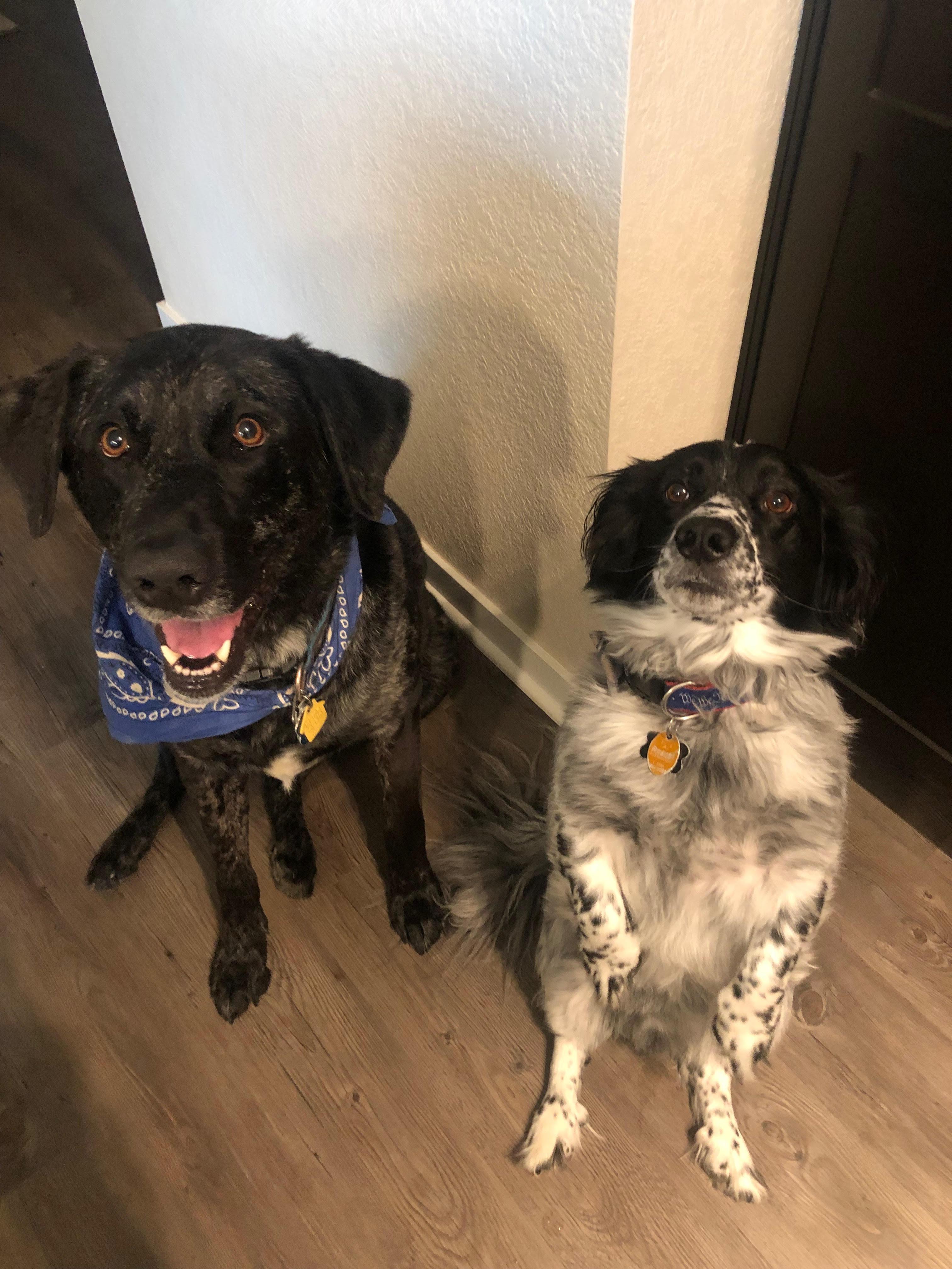 Sadie and Brady