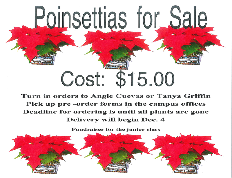 Poinsettias For Sale
