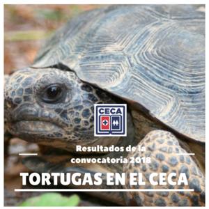 TORTUGAS EN EL CECA.png