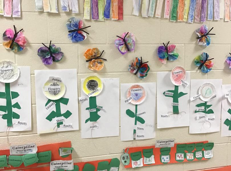Kindergarten work in hallway- Living things