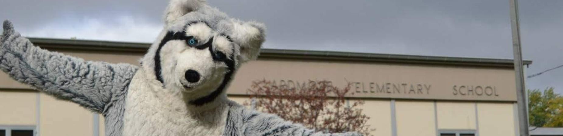 Husky Standing Outside Ardmore Elementary