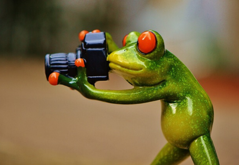 Picture of a frog with a camera