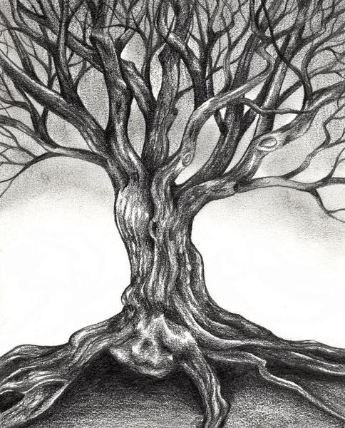 tree sketch.jpg
