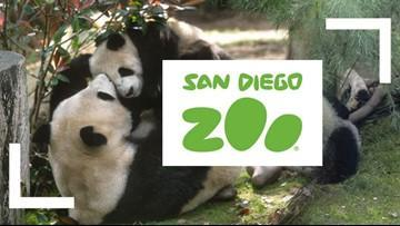 San Diego Live Zoo