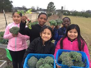 Students harvest broccoli crowns before freezing temperatures. Pictured below (Jaylin Chastang, Scarlette Gomez-Parra, Destin Jones, Margarita Lastor-Noj, Geraldine Lopez-Gomez)