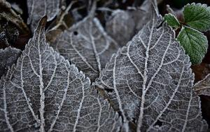 frost-4730917_640.jpg