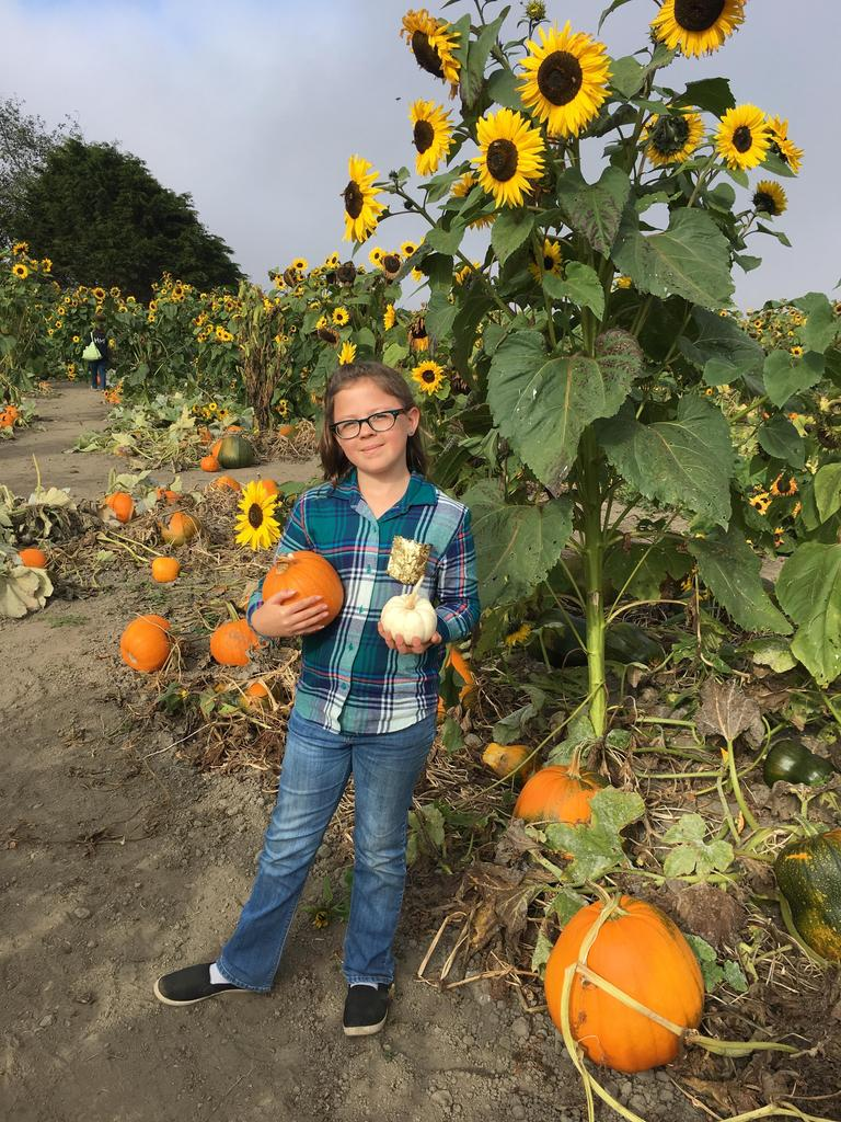 Girl holding pumpkins in front of sunflower